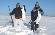 Зимняя охота на лису, зайца, глухаря и тетерева, волка и рысь