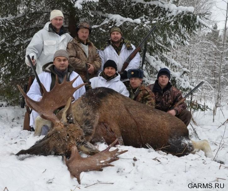 охота на лося фото