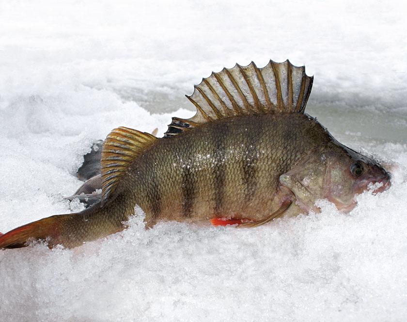 смотреть фильм особенности национальной рыбалки в hd